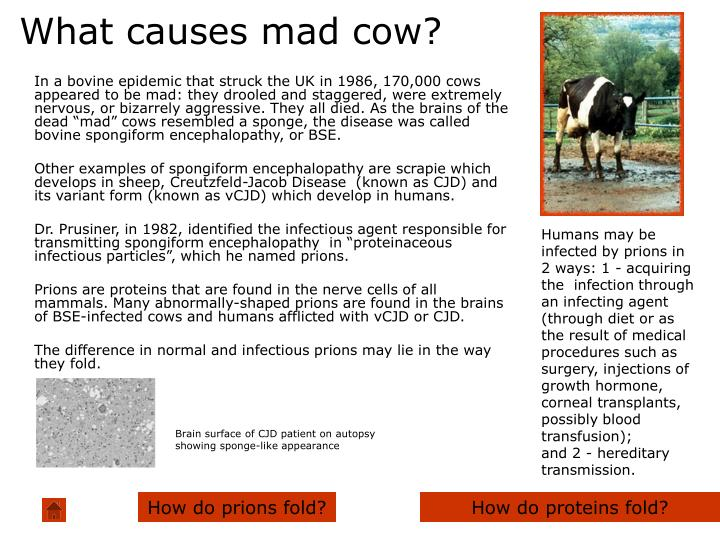 What causes mad cow