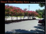 street tree planting area