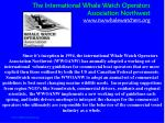 the international whale watch operators association northwest www nwwhalewatchers org