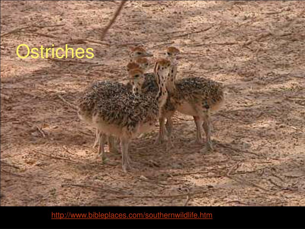 http://www.bibleplaces.com/southernwildlife.htm