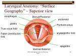 laryngeal anatomy surface geography superior view
