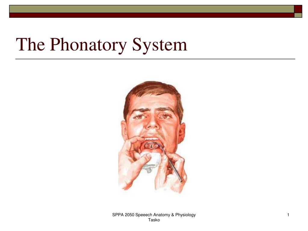 the phonatory system l.