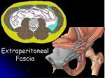 extraperitoneal fascia