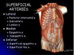 superficial arteries