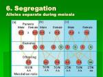 6 segregation alleles separate during meiosis