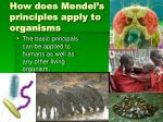 how does mendel s principles apply to organisms