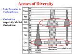 acmes of diversity