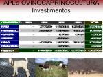 apl s ovinocaprinocultura investimentos