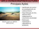 apl s ovinocrapinocultura principais a es