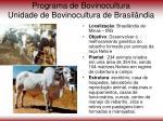 programa de bovinocultura unidade de bovinocultura de brasil ndia
