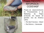 projeto fao cfc infopesca codevasf