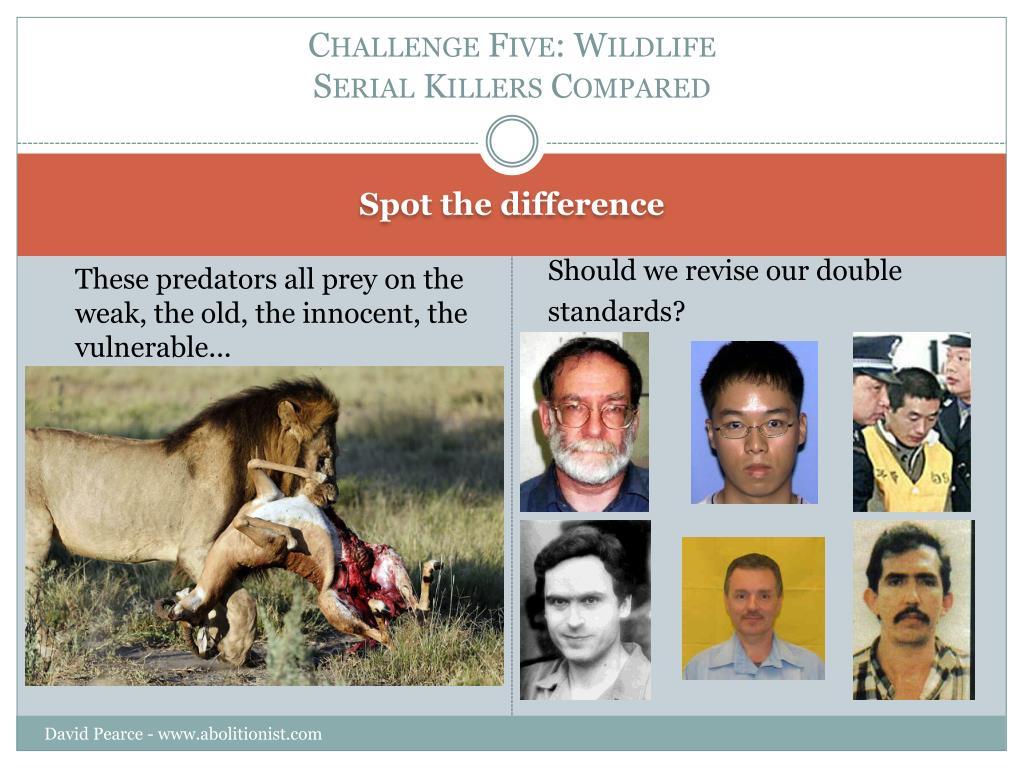Challenge Five: Wildlife