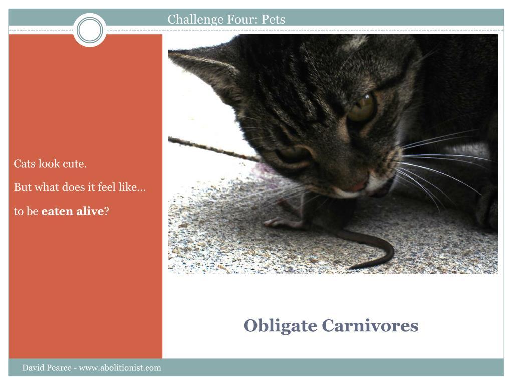 Challenge Four: Pets