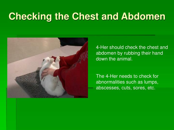 Checking the Chest and Abdomen