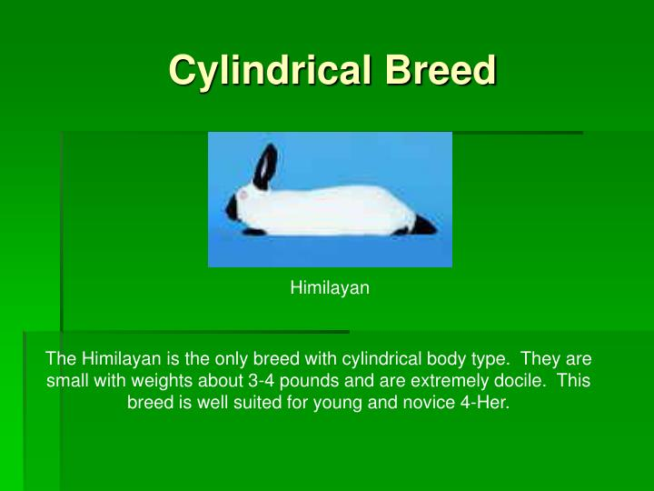 Cylindrical Breed