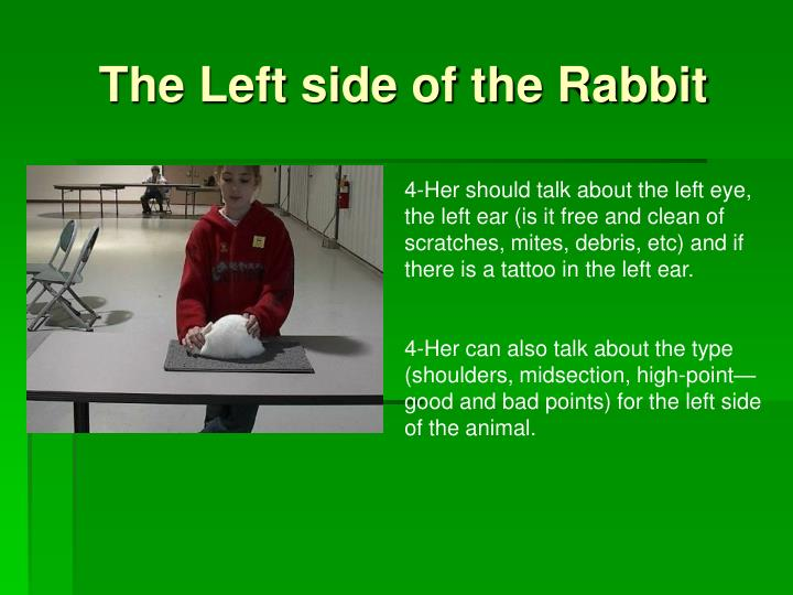 The Left side of the Rabbit