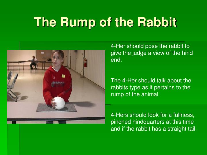 The Rump of the Rabbit