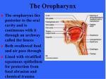 the oropharynx