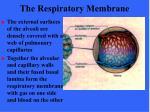 the respiratory membrane63