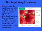 the respiratory membrane65