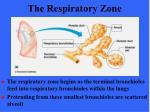 the respiratory zone