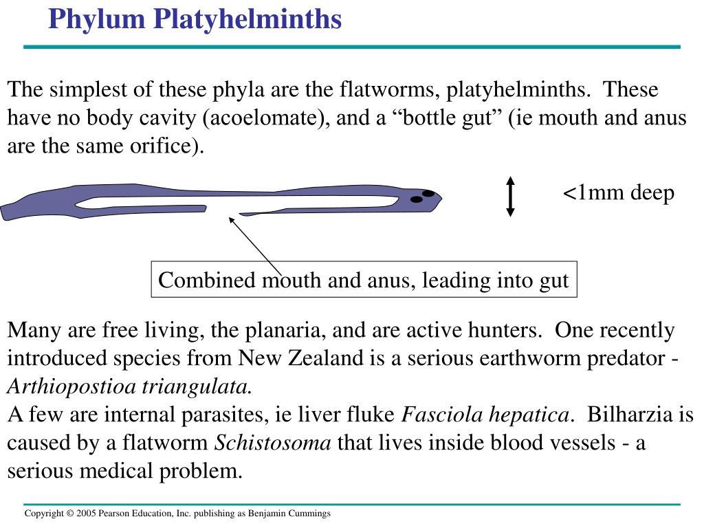 Phylum Platyhelminths