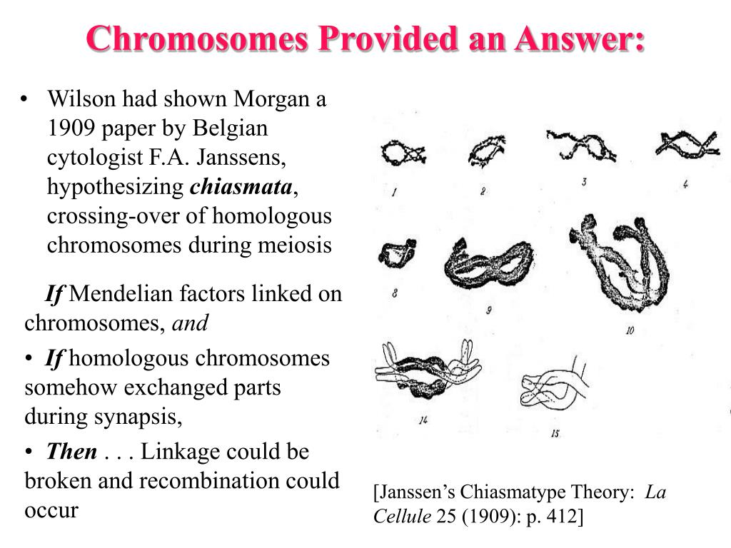Chromosomes Provided an Answer: