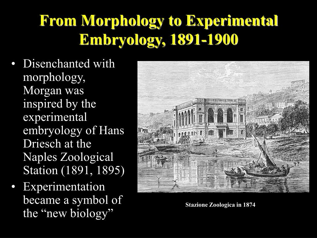 From Morphology to Experimental Embryology, 1891-1900