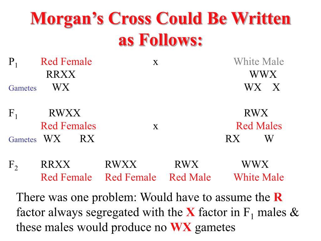 Morgan's Cross Could Be Written as Follows: