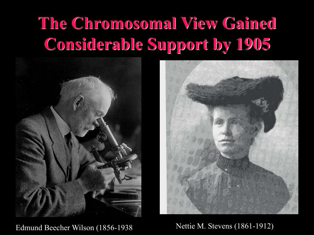 The Chromosomal View Gained Considerable Support by 1905
