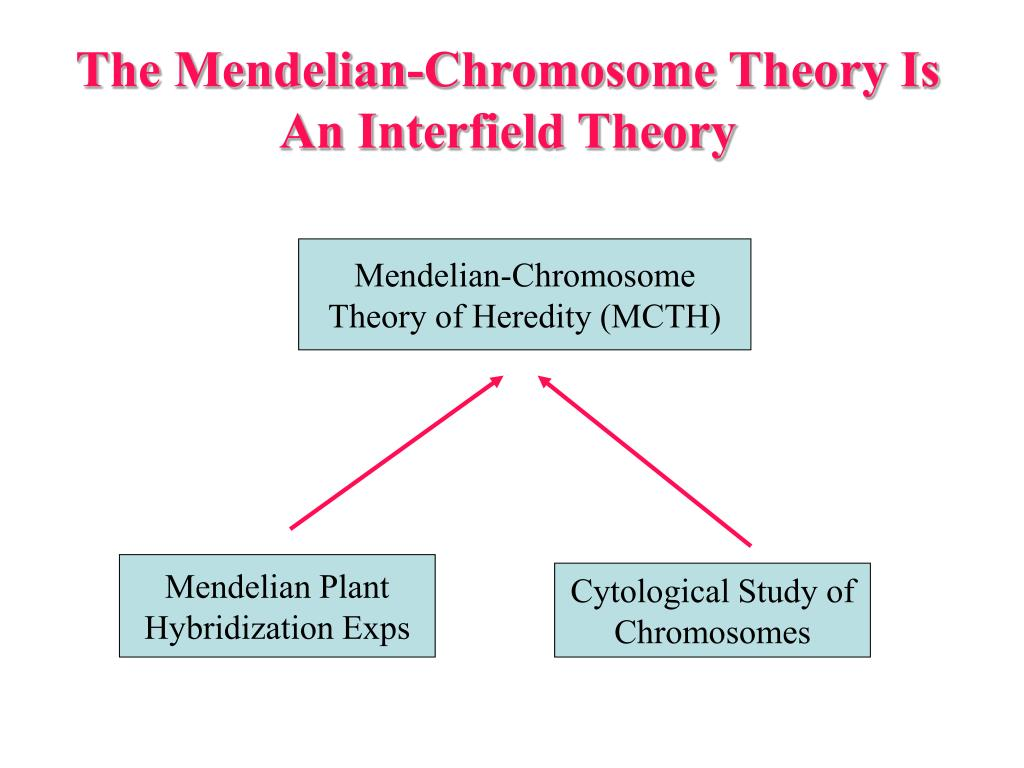 The Mendelian-Chromosome Theory Is An Interfield Theory