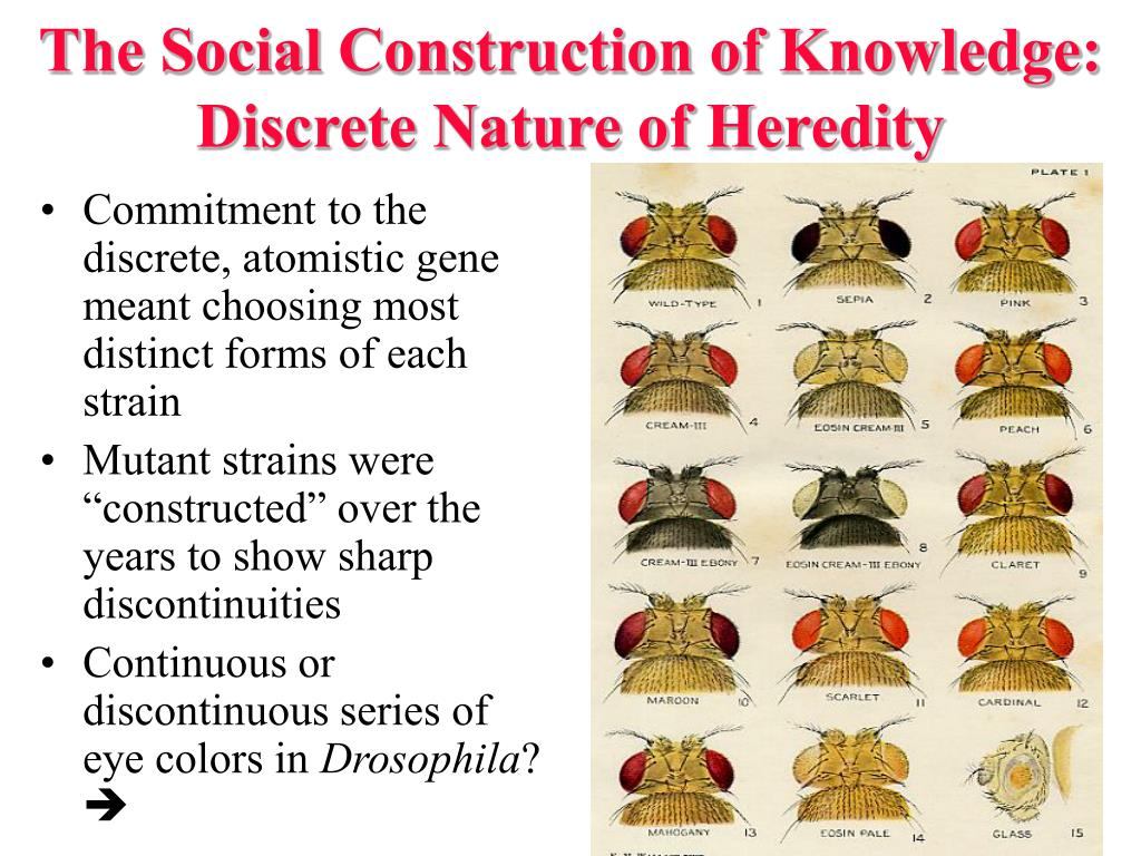 The Social Construction of Knowledge: Discrete Nature of Heredity