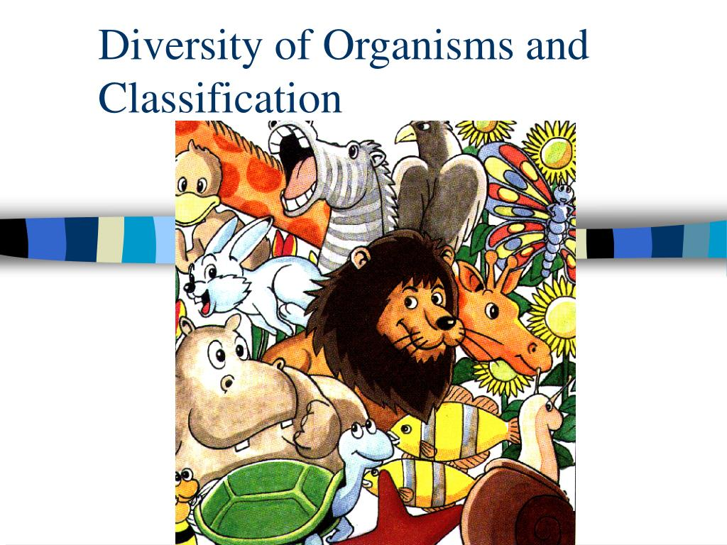 diversity of organisms and classification l.