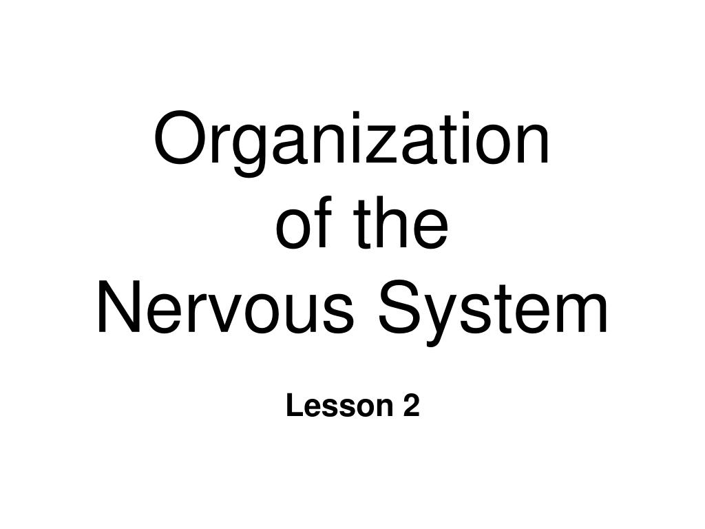organization of the nervous system l.