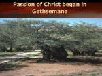 passion of christ began in gethsemane