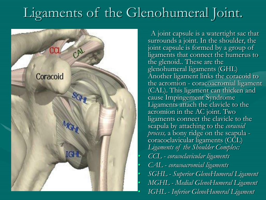 Ligaments of the Glenohumeral Joint.