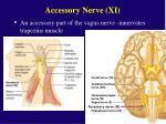 accessory nerve xi