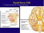 facial nerve vii