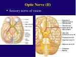 optic nerve ii