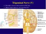 trigeminal nerve v