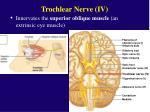 trochlear nerve iv