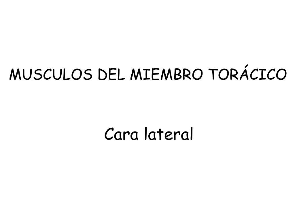 MUSCULOS DEL MIEMBRO TORÁCICO