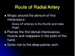 route of radial artery49