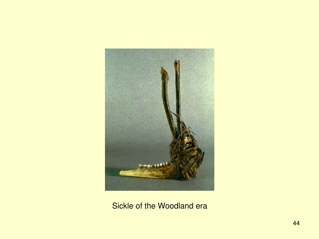 Sickle of the Woodland era