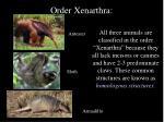 order xenarthra