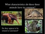 what characteristics do these three animals have in common