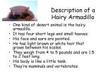description of a hairy armadillo