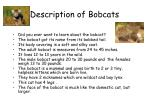 description of bobcats