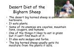 desert diet of the bighorn sheep