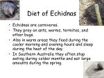 diet of echidnas